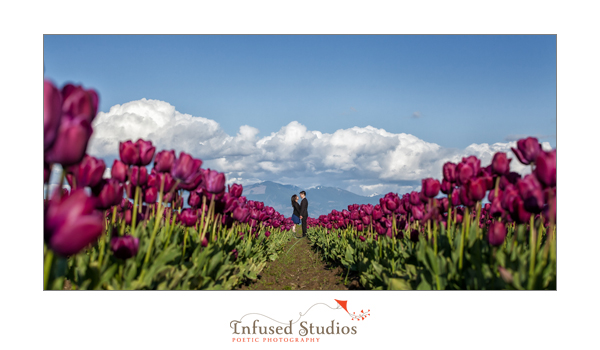 Purple Tulips by Seattle engagement photographers