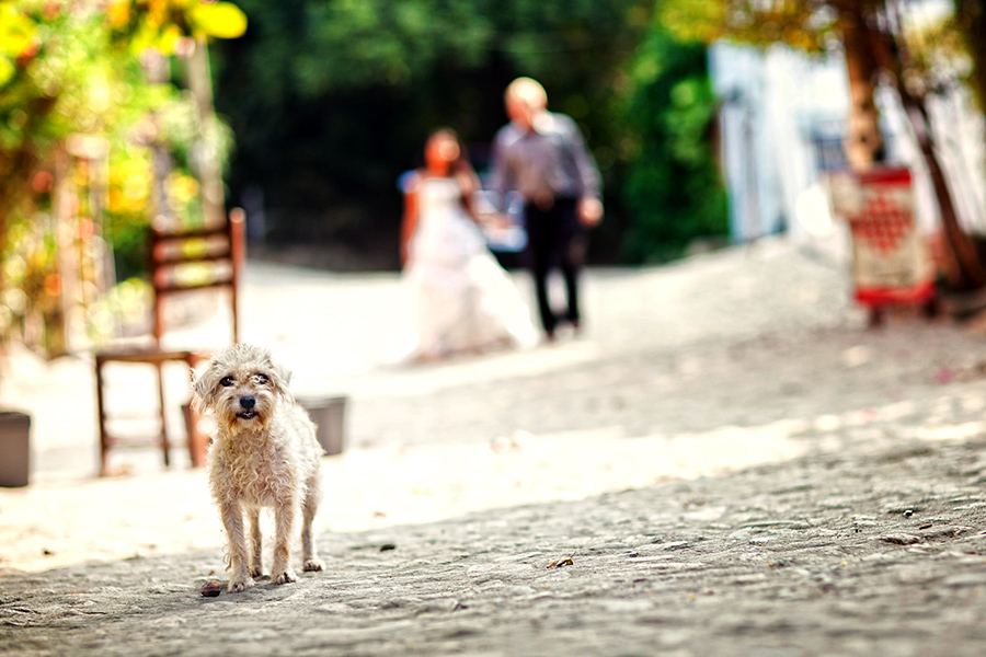 Puppy in foreground :: Destination Wedding Photography by infusedstudios.ca
